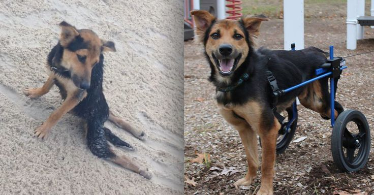 This dog's transformation thanks to the help of strangers online is astonishing.
