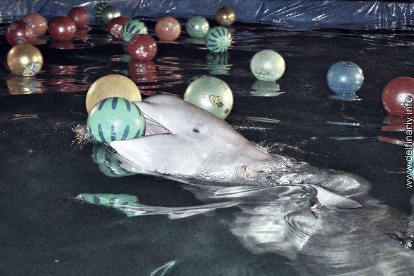 Les aquariums itinérants de Russie...
