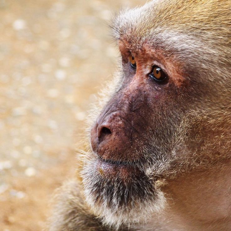 The Tham Pla Cave (which means Fish Tail Cave) is the reason why visitors come to this spot near Chiang Rai. But when I was there the real attraction were all the monkeys around. Maybe this is why this place is better known as the Monkey Temple