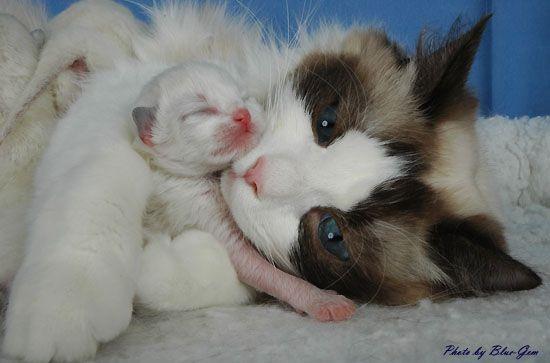 cat growling at kitten
