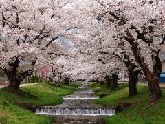 一度は絶対に見ておきたい日本の絶景 福島県にある観音寺川を紹介しようと思います 1kmにわたる観音寺川という川の両岸に約200本の桜が植えられていて春には桜の絶景を作り出しています() 緩やかに流れる河川のほとりを散策していると心穏やかになれる場所です tags[福島県]
