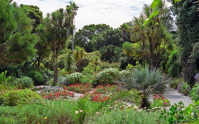 Tresco Abbey Gardens, Scilly Isles, UK | A superb Sub-Tropical Garden (10 of 12) | Flickr - Photo Sharing!