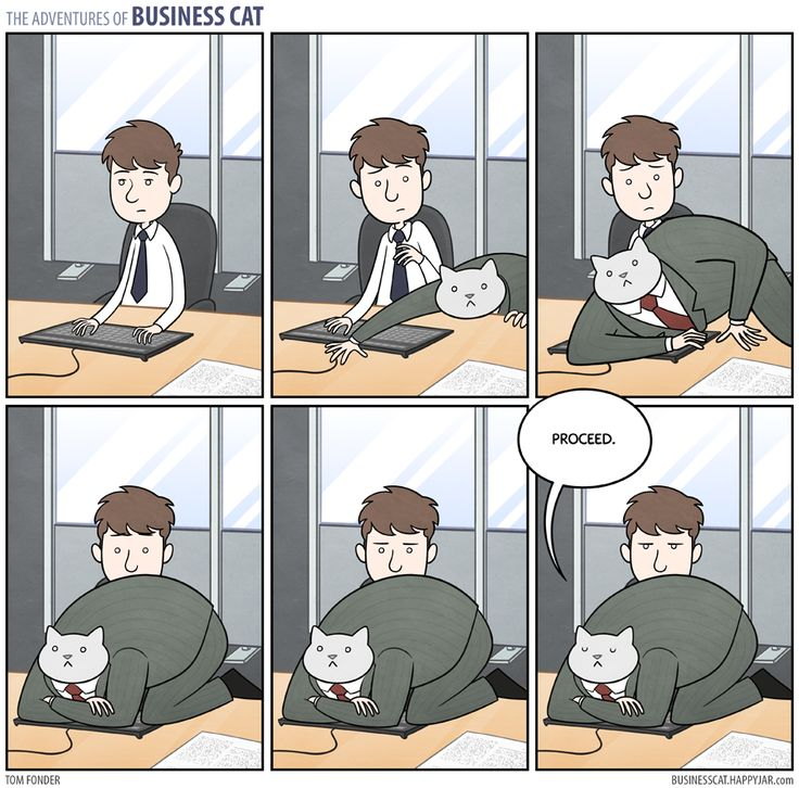LOL!  ~~~  Business Cat - Keyboard