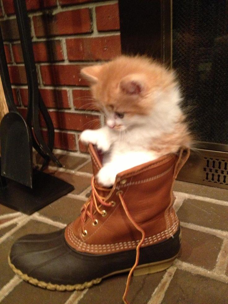 L.L.Bean kitten holder.