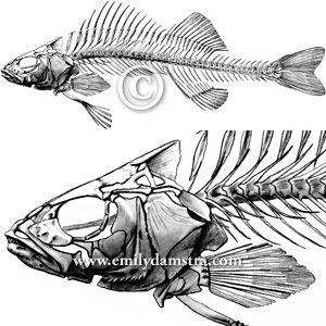fish skeleton drawing pinterest. Black Bedroom Furniture Sets. Home Design Ideas