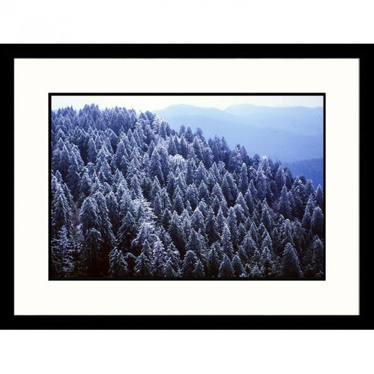 Great American Picture Iced Spruce Forest, Great Smokey Mountains, Tennessee Framed Photograph - Jac
