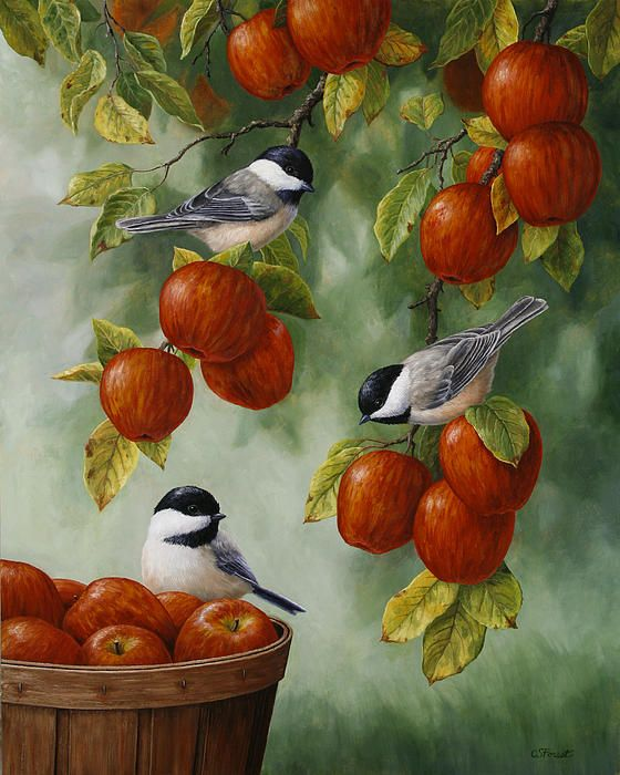 Bird Painting - Apple Harvest Chickadees by Crista Forest