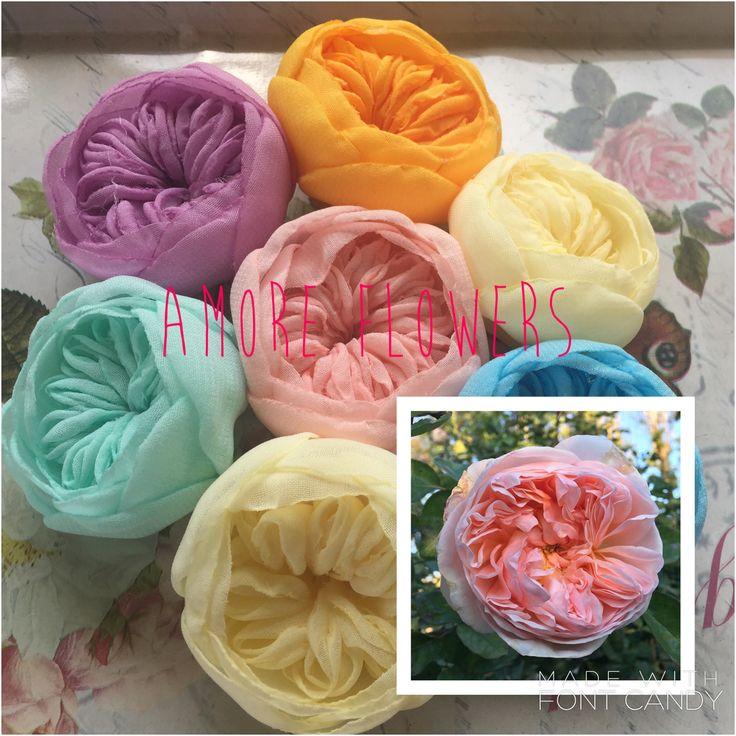My evelyn roses...