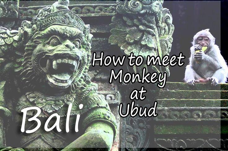 "Dengan menyebut nama nya saja ""Sacred Monkey Forest Sanctuary Ubud"" monkey forest di ubud bali pastinya sahabat traveler tahu artinya bahwa tempat tersebut adalah hutan kera dan nantinya akan menjumpai banyak kera di tempat wisata tersebut, bukan?  #monkeyforestUbud #ubud #bali #hutankera #tegenungan #travel"