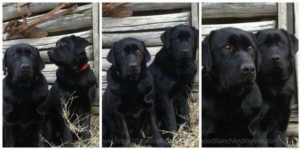 Ted Hoff Dogbehavioral Twitter Dog Boarding Dog Training