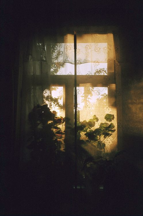 sheers + plants + light= a moment of beauty | Happy Place ...