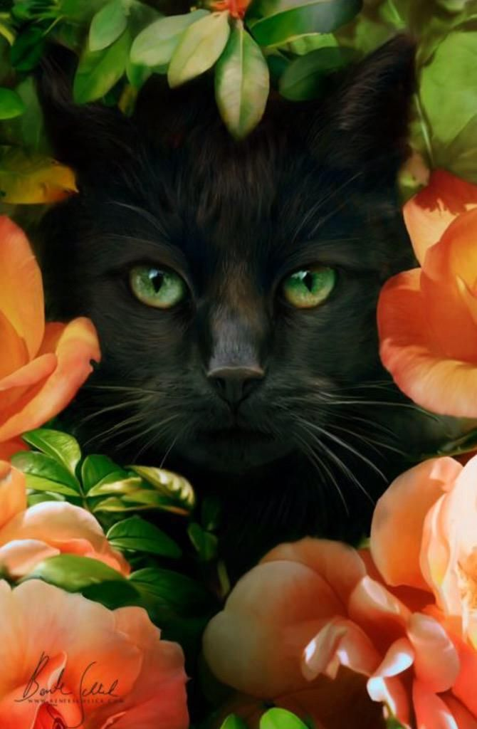 The Black fur and Orang Flowers go so well together
