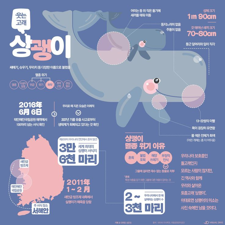 태안 생태계의 희망이 된 웃는고래 '상괭이' [인포그래픽] #porpoise / #Infographic ⓒ 비주얼다이브 무단 복사·전재·재배포…