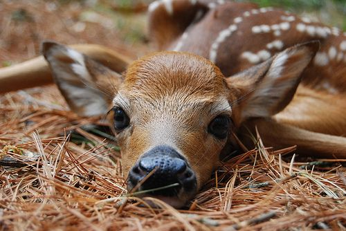 Besides the fact that this is a deer...  it totally reminds me of my dogs!