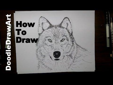 Drawing: How To Draw a Wolf Face Step by Step - Arctic Wolf (sketched) or Grey Wolf (painted) - YouTube