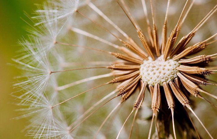 JOUR 8 : Belle plante #Flow29jours