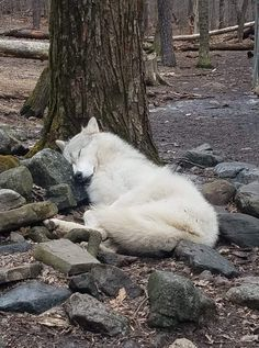 Gotta have a pillow – even if it is a rock!  A dog… – #dog #fantasy #Gotta #Pi…