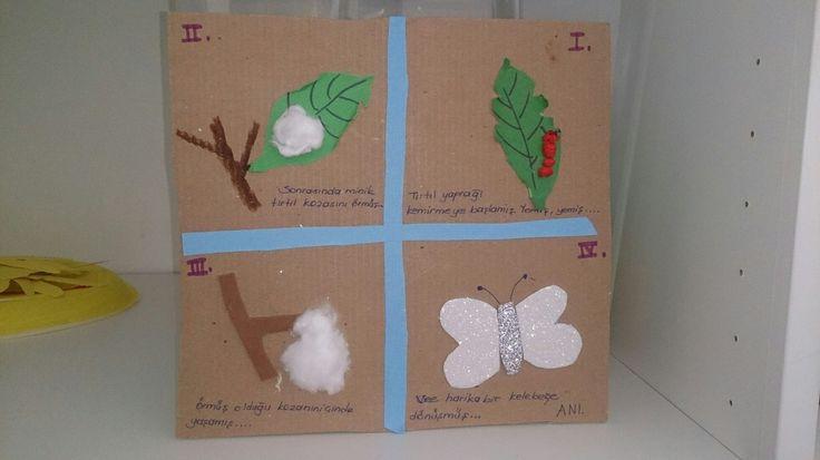 Kelebeğin oluşumu.. #okul #öncesi #kelebek