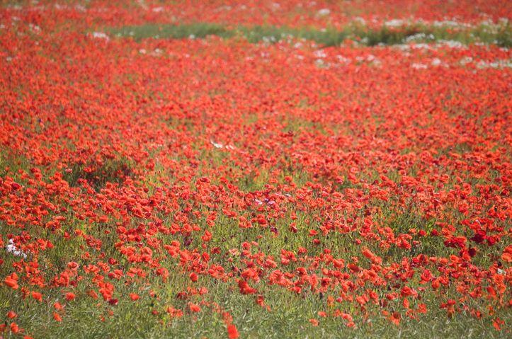A flower field not far from Dragsholm Castle. www.dragsholm-castle.dk