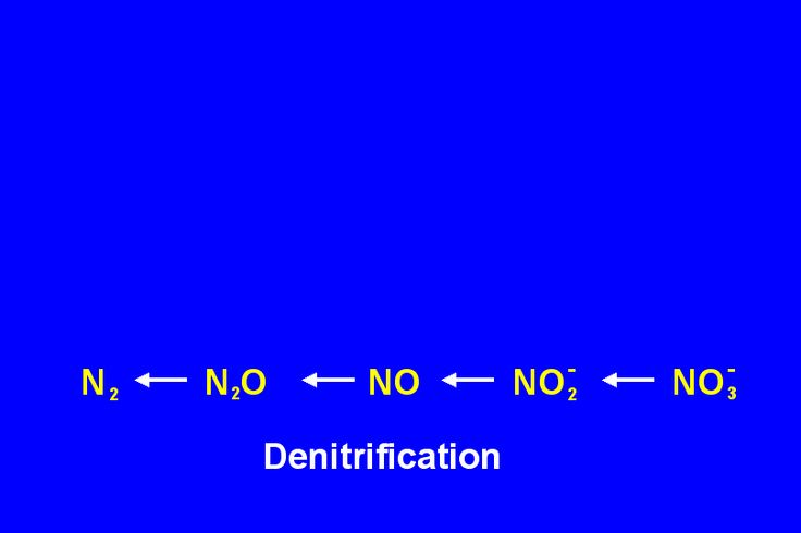 what is Denitrification?  Denitrification is a process that involves nitrogen getting back into the atmosphere. It can be used when there is too much nitrogen in the soil from fertilizer. For further details visit www.microlifeindia.org