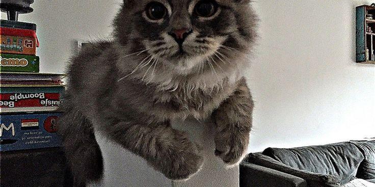 Hoe houd ik mijn Siberische kat gezond? | Siberische Kat