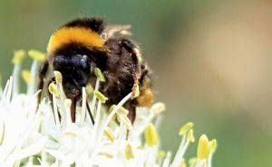 How to Get Rid of Bumblebees, though I don't want to kill them