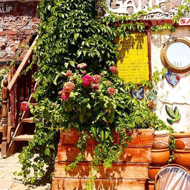 By @mycappadociatrip on Instagram ☆2017/03/25 04:35:17 ☆Avanos ☆春夏のカッパドキアはあちらこちらで花が咲き誇る💐🌼🌸早よ来いそんな季節☀️#beauty #beautiful #vacation #turkey #turkeystagram #turkeyphotooftheday #ig_turkey #cappadocia #instagood #instagram #vsco #vscocam #flower #beautiful #sightseeing #travel #trip #lifewelltravelled #トルコ#カッパドキア#風景#景色#花#街#旅#旅行#海外旅行#写真 #写真好きな人と繋がりたい #写真撮ってる人と繋がりたい