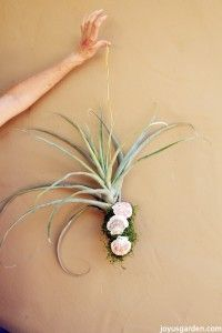 The Easy Way To Hang Air Plants, Succulents & Flowers - add some shells for an extra touch