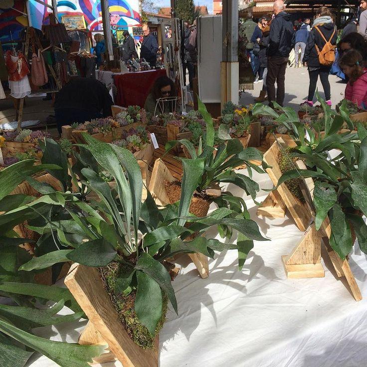 #platycerium bifurcatum (Cuerno de alce) sobre base de madera reciclada con soporte para colgar a pared. Lugar sombreado hasta 0 / -1 grado C. #staghornfern #woodpallet #deco #vintage #handmade #scgreenfingers #vintagefest #mercantic