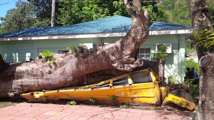 The crushed bus at the Botanical Garden in Roseau is probably the only physical reminder of the passage of Hurricane David