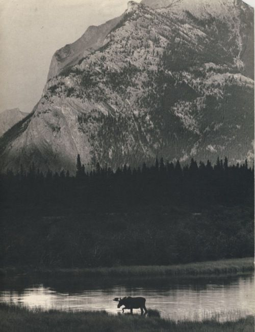 Moose.: Mountain, White Sunri, Amazing Photo, Adventure Wild, Rooms Art, Outdoor, Black White, Natural, Animal