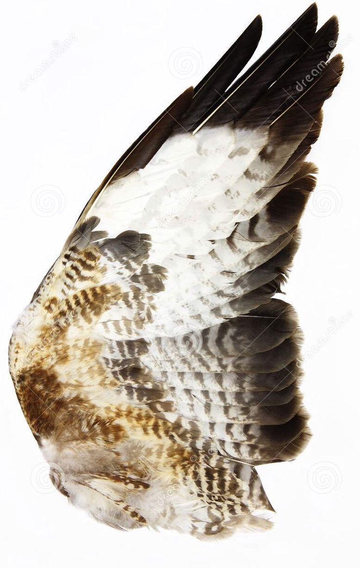 Vleugels van een enorme havik