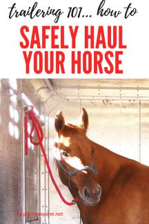 Trailer tips, hauling horses, how to haul your horse, safety on the road, traveling with horses, trucks and trailers...