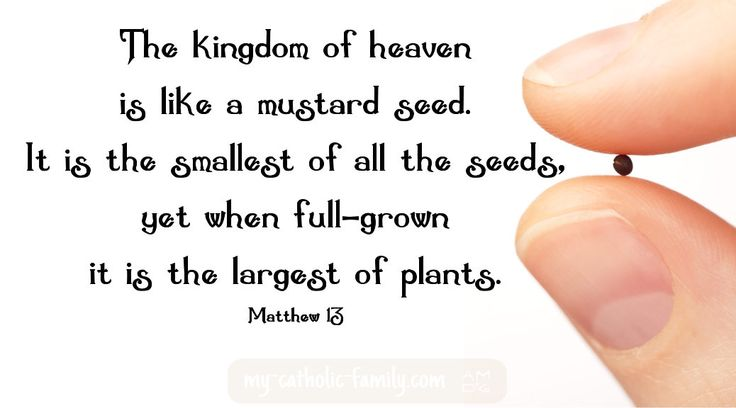 Today's Mass readings: The kingdom of heaven is like a mustard seed that a person took and sowed in a field. It is the smallest of all the seeds, yet when full-grown it is the largest of plants.  http://www.my-catholic-family.com/4613/mass-readings-sixteenth-sunday-ordinary-time/
