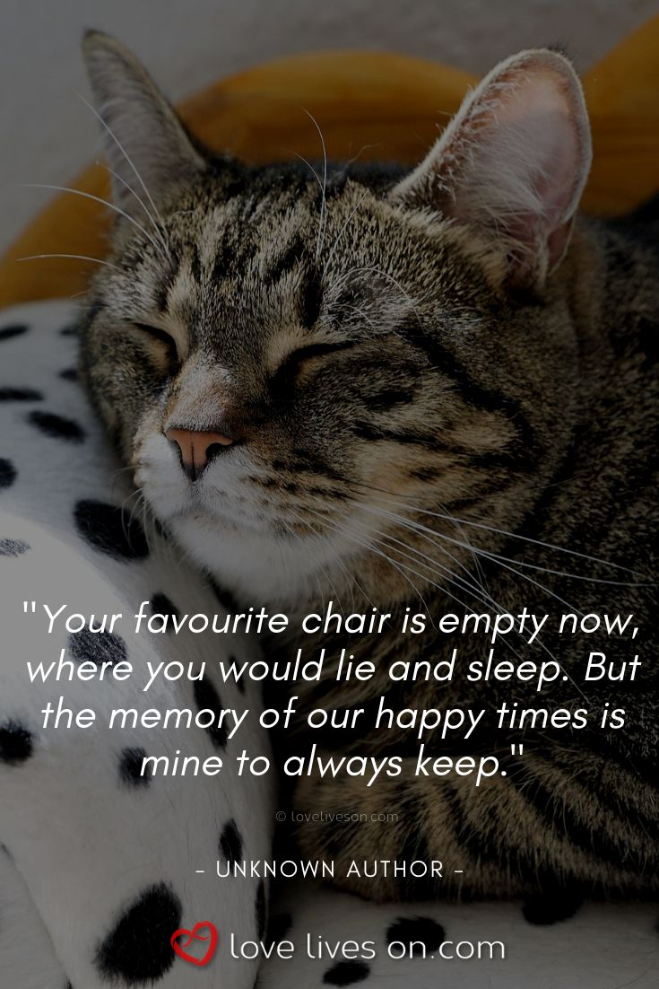 Quotes On Loss: Loss Of Cat Quotes 50+ Beautiful Loss Of Pet Quotes Find
