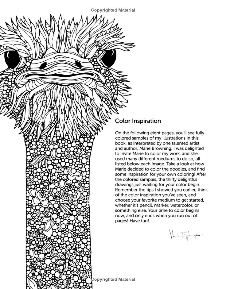 creative coloring birds art activity pages to relax and enjoy | Creative Coloring Animals: Art Activity Pages to Relax and ...