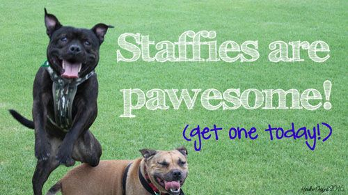 1918 Best Group Staffies Best Dogs Ever Images On