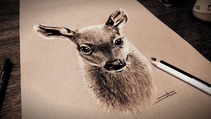 Mixed media illustration on brown paper of a young baby deer using black and white pencil, pastel pencils and acrylics by Wouter Haine. This will be printed and used as a Christmas card. www.dutch-designs.eu