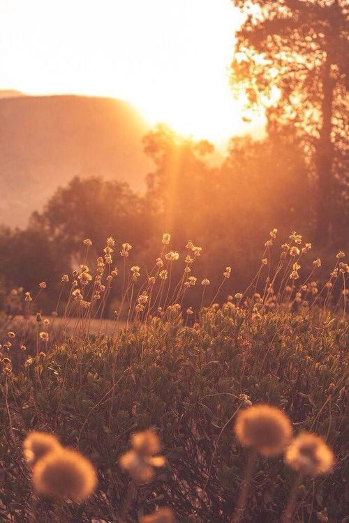 #escape #evenings #meadow