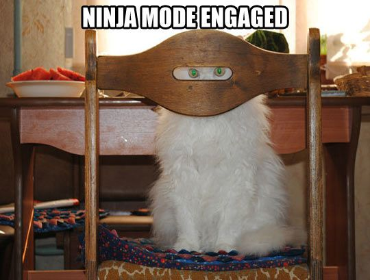 Ninja mode. Level: stealth    @Sarah Chintomby Murphy Flynt   soooooo cute!!!!!