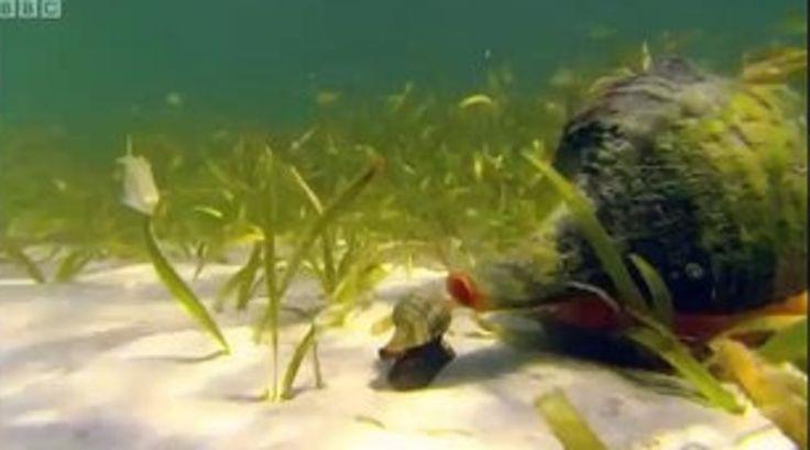 Heremietkreeften zijn de linkse hippiekrakers van de oceaan