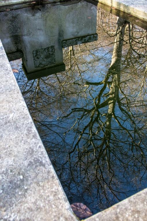 Riflessi..Reflections..  Faggeta Monte Venere. Photo R. Cianchi