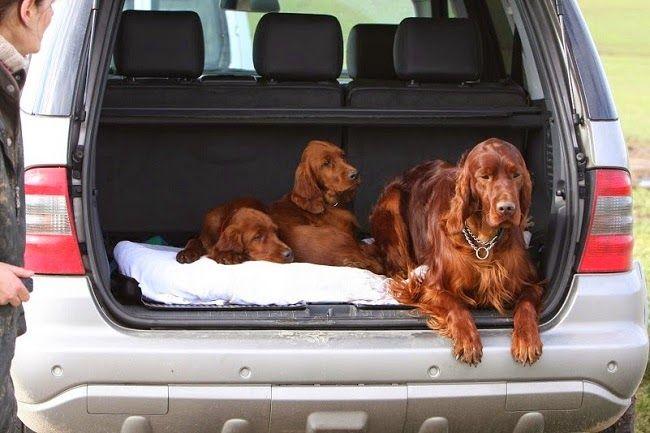 Na psim tropie: Czy warto ubezpieczyć psa