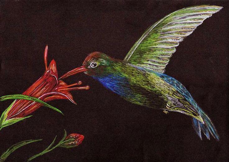 ptak, kwiat, kredka na czarnym tle