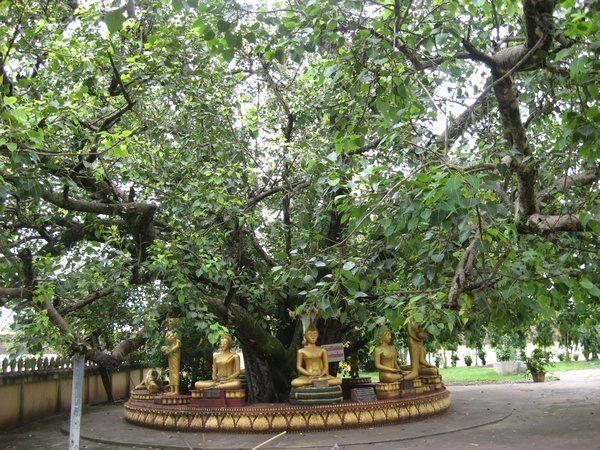 Bugün Budistler için burası önemli bir hac yeri olarak görülmektedir. Güneydoğu Asya topraklarında da, örneğin Tayland'daki Wat Phra Kaeo Tapınağı'nda, en azından bir tane Bodhi ağacı vardır. Bodhi ağacı, nisan ya da mayıs ayında dolunay sırasında Vesak Bayramı için bir odak noktası olarak görülmektedir.