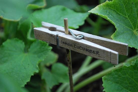 Frugal plant marker