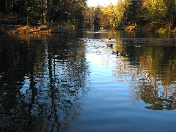 Lake in Villa Reale - Monza (Italy)