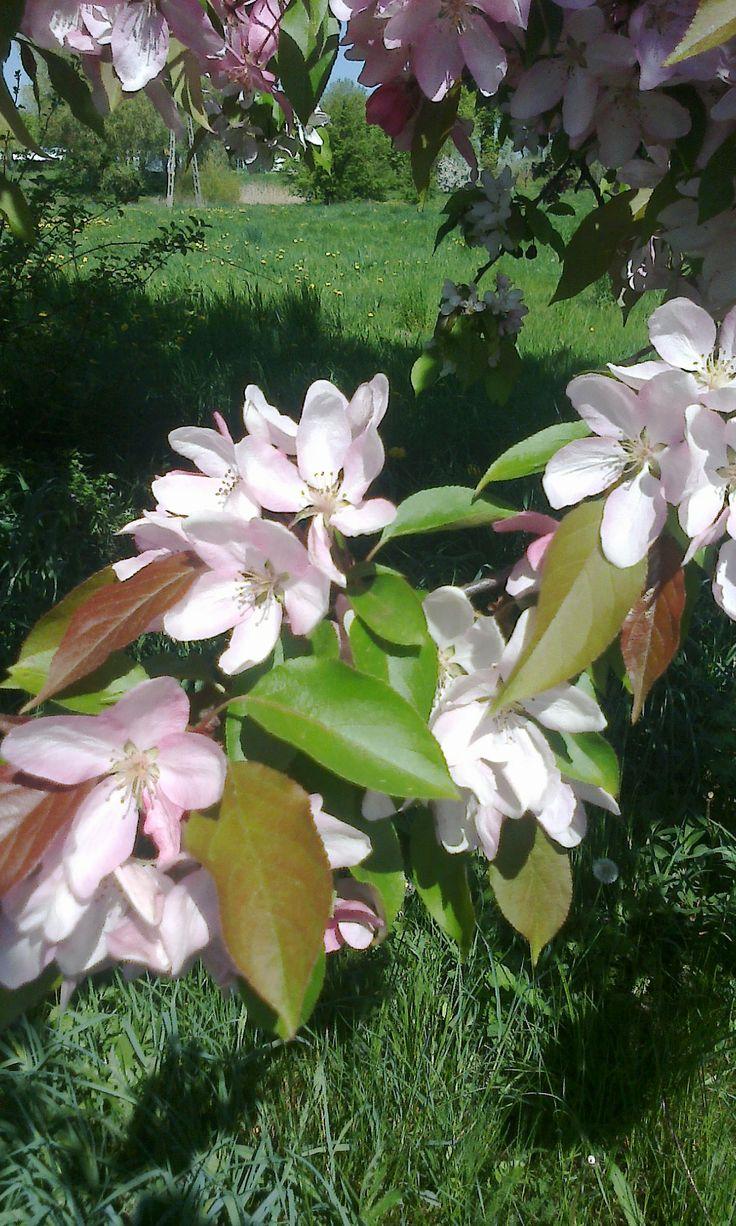 jasno różowe kwiatki