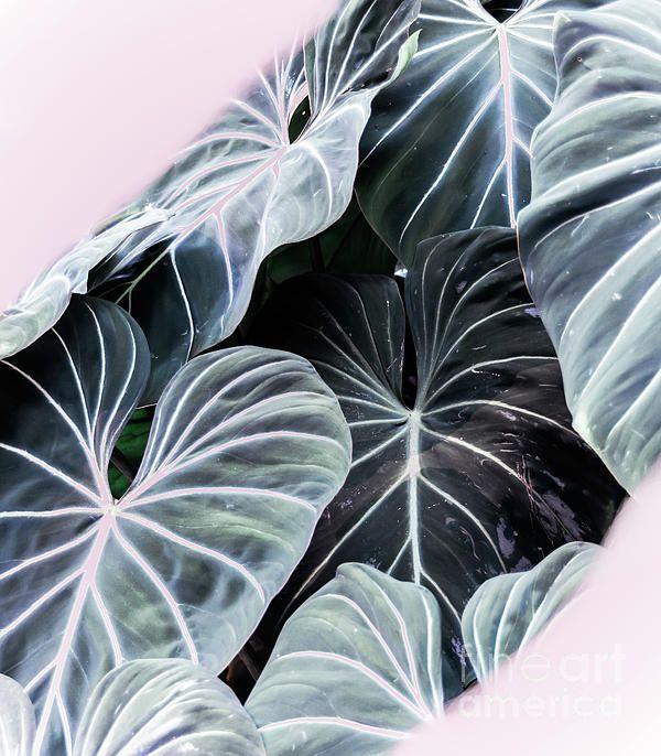 Tropical Foliage by Andrea Anderegg of Fine Art America