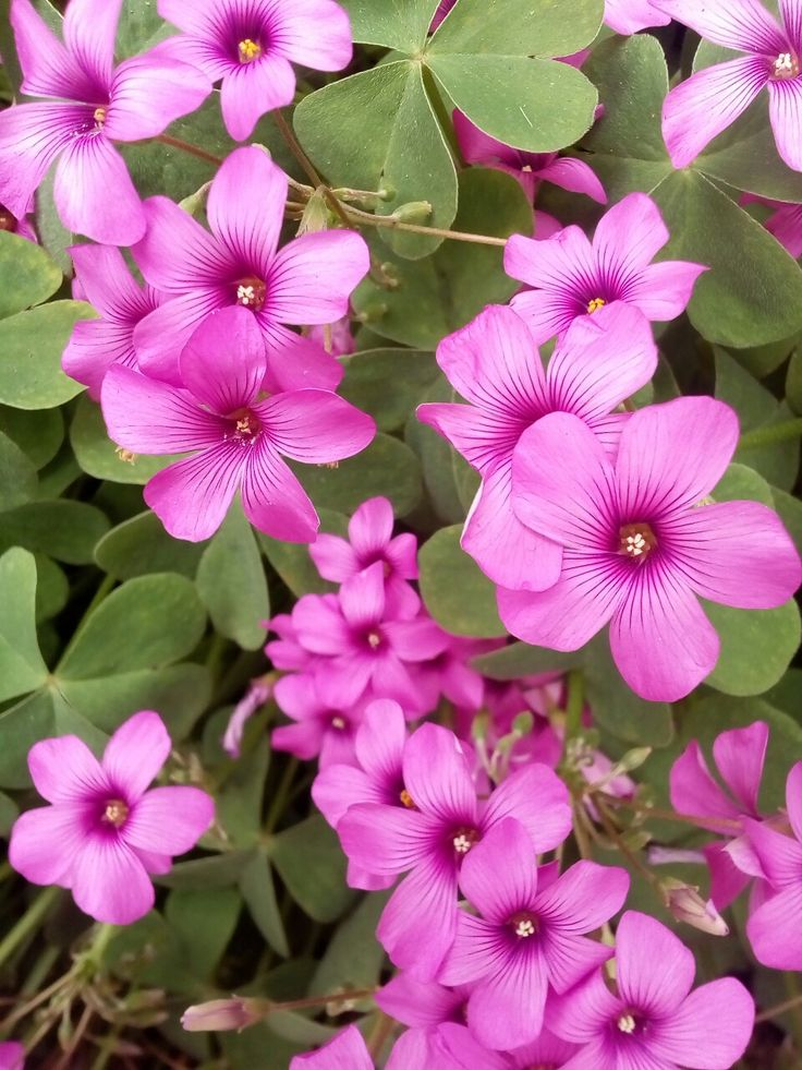 Humildes florcitas